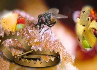 how to get rid of Fruit Fly Trap