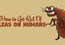How to get Rid of Fleas on Humans using home remedies for fleas on humans
