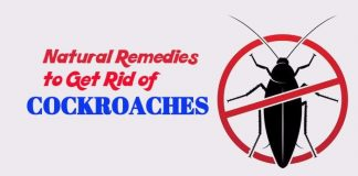 home remedies to get rid of Cockroaches