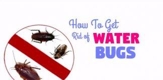 get rid of water bugs